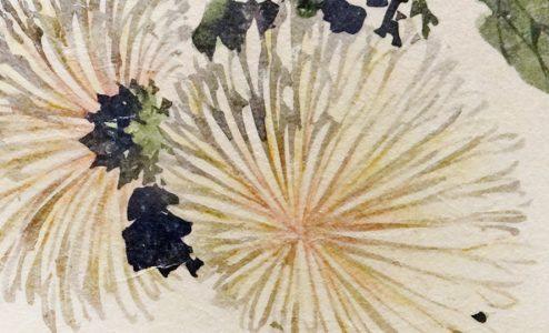 Chrysanthemums, Hokusai