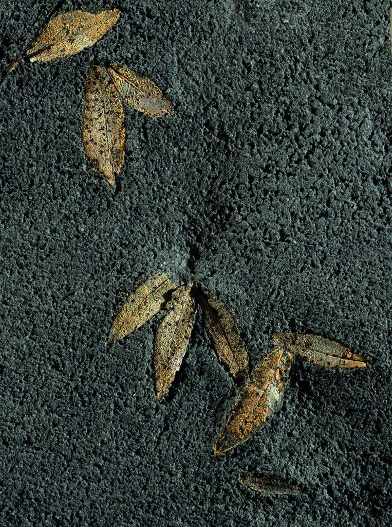 Εγκλείσματα φύλλων ελιάς σε λάβα