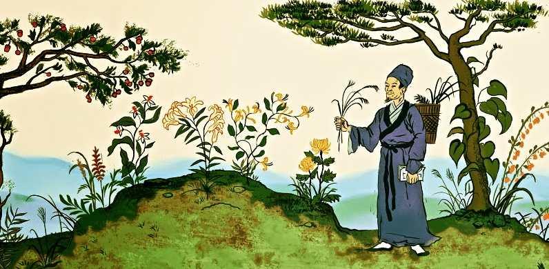 Η ιστορία της συλλογής πάνω από 1.000 ειδών βοτάνων και φυτών στην Κινεζική κουλτούρα αποδίδει περίπου 400 συνταγές φαρμάκων γνωστές μέχρι σήμερα.