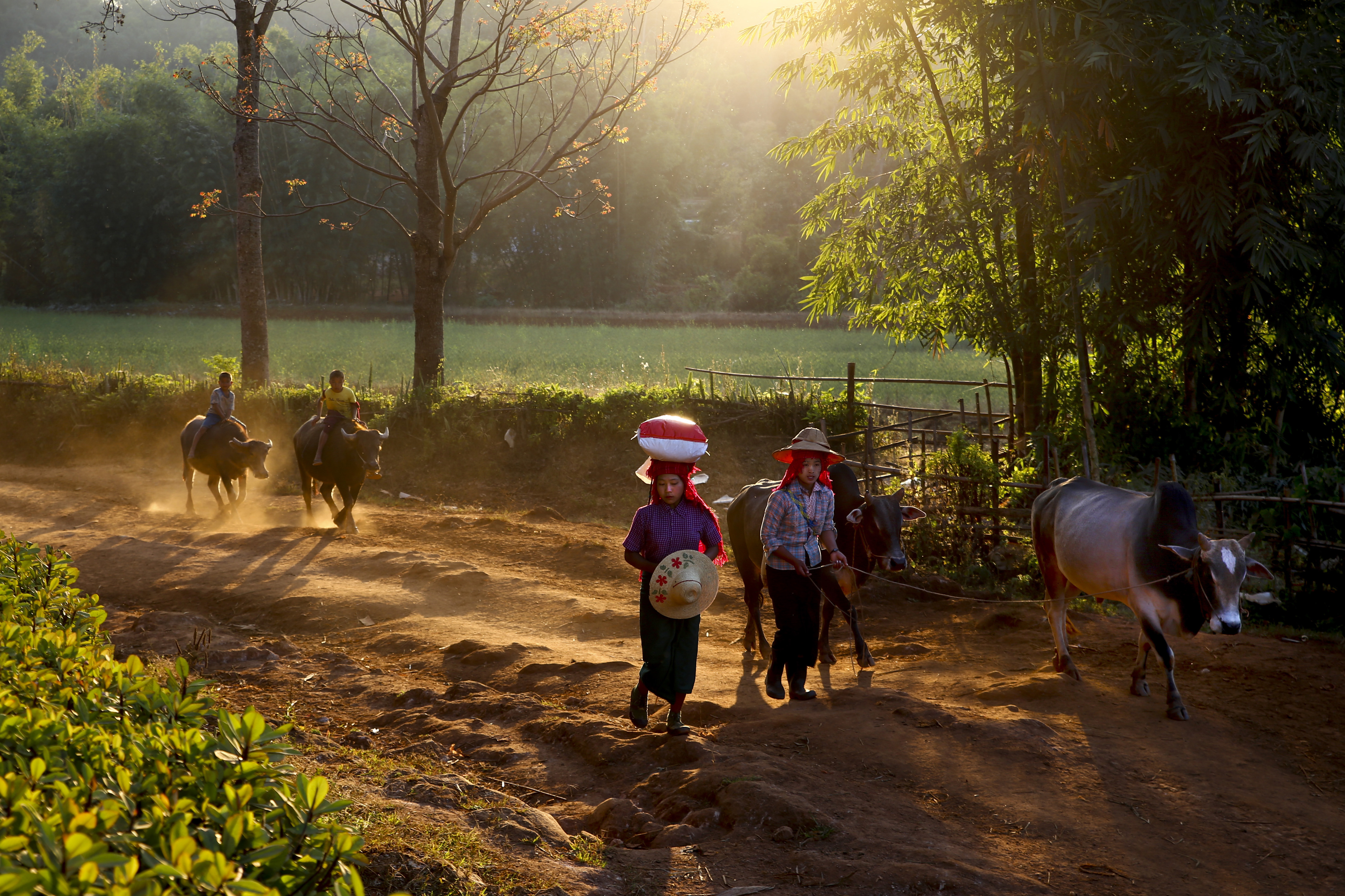 """Burmese day"", επιλέχθηκε ως φωτογραφία της ημέρας στο National Geographic"
