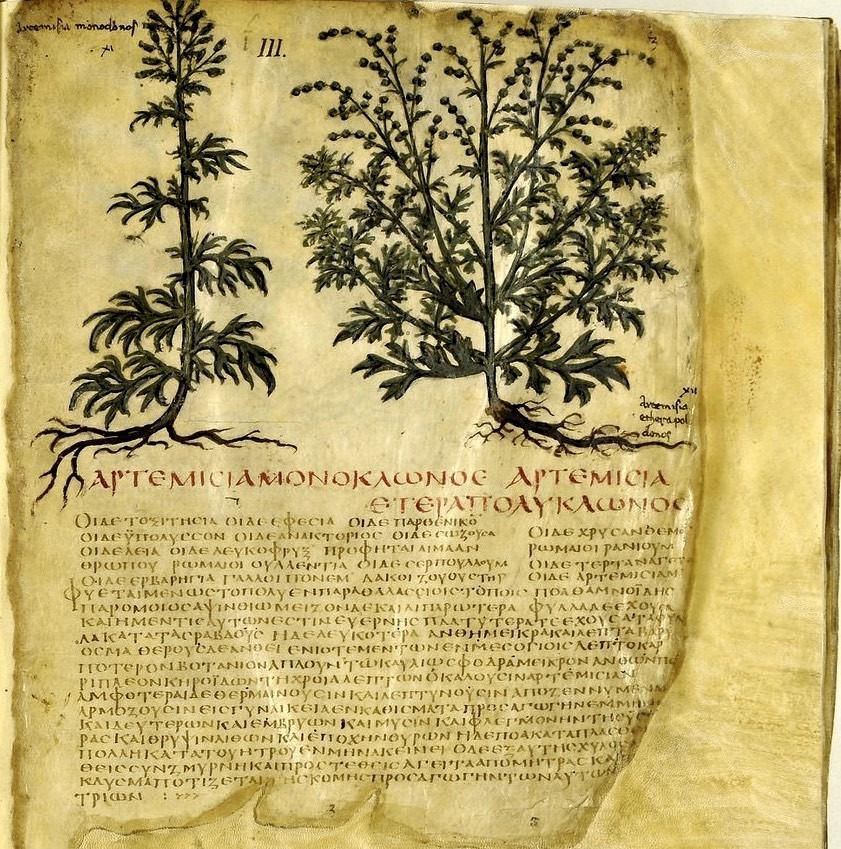 Ο Ναπολιτανικός κώδικας του Διοσκουρίδη είναι ένα χειρόγραφο του 500 με 700 μ.Χ. που περιλαμβάνει τα φαρμακευτικά φυτά, τις θεραπευτικές χρήσεις τους, τα χαρακτηριστικά της μορφής και το περιβάλλον στο οποίο συναντώνται. Έχει βασιστεί στην πραγματεία «Περί ύλης Ιατρικής» του Διοσκουρίδη, του Έλληνα ιατρού που γεννήθηκε στην Αναζαρβό της Κιλικίας και έζησε τον 1ο αιώνα μ.Χ, κατά τη διάρκεια της βασιλείας του αυτοκράτορα Νέρωνα.