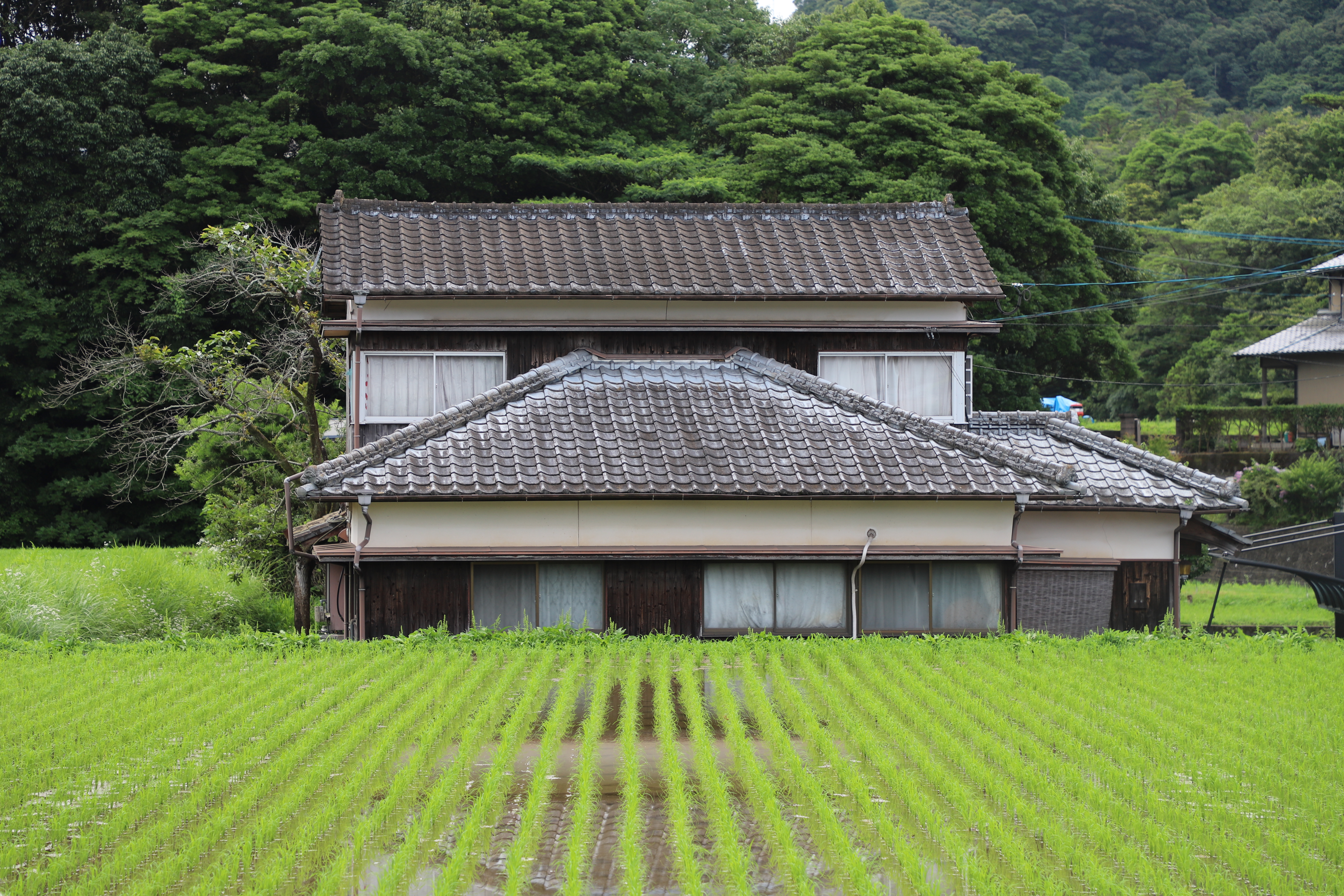 Ο Γιάννης Γκίκας πέρασε 3 μήνες σ΄ένα παλιό Ιαπωνικό σπίτι στην πλαγιά ενός καταπράσινου βουνού.