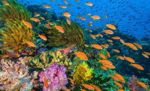 Ωκεανοί: Ο Γαλάζιος Πλανήτης μας