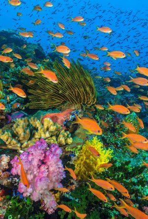 Ωκεανοί: «Ο Γαλάζιος Πλανήτης μας» μία παραγωγή του BBC Earth στο Ίδρυμα Ευγενίδου
