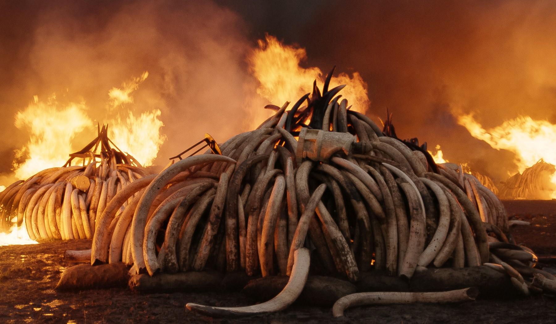 Anthropocene: The Human Epoch των Τζένιφερ Μπάιχβαλ, Έντουαρντ Μπουρτίνσκι, Νικολά ντε Πενσιέ